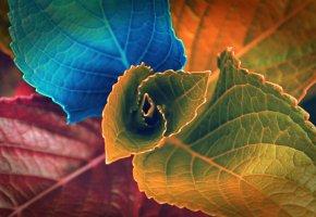 цветок, листья, разноцветные, цвета, растение