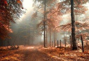 foggy, forest, туман, дорога, осень, лес, листья