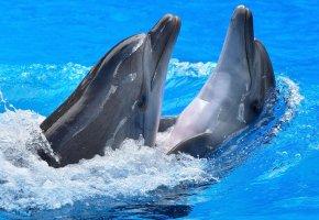 море, бассейн, дельфин, пара, игра, брызги