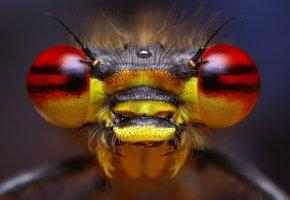 насекомое, усики, боке, глаза, волоски