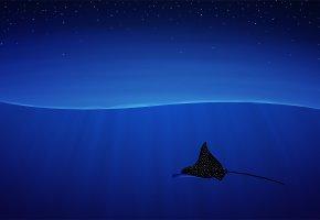 скат, звездный, волна, ночь, синий фон