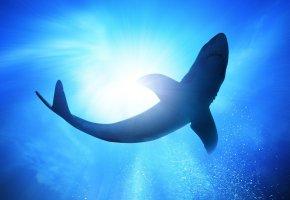 Море, акула, солнце, пузырьки, вода