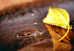 лужа, осень, капли, лист