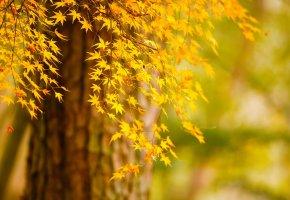 осень, дерево, природа, листья желтые, золотая пора
