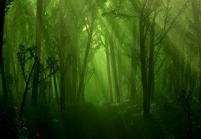 ручей, деревья, свет, Лес, листья, трава