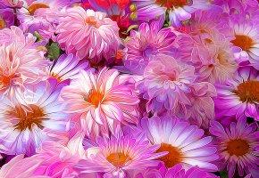 цветы, лепестки, клумба, сад