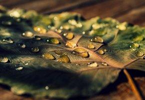 лист, вода, листочек, капля, роса