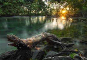 джунгли, река, деревья, утро, солнце, свет, коряга