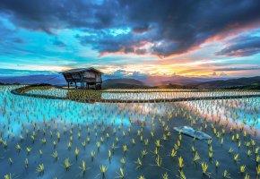 плантация, рис, хижина, ростки, небо, вода