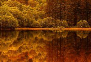 осень, лес, вода, деревья, отражение, красота, берег