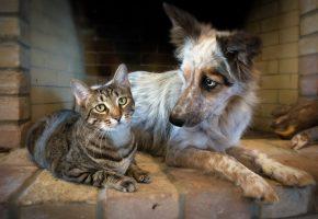 Обои кошка, собака, дружба, морда, шерсть, взгляд