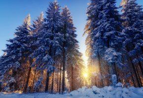 Обои зима, снег, лес, деревья, ёлки, солнце, лучи