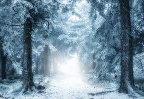 зима, лес, снег, дорога, туман, деревья
