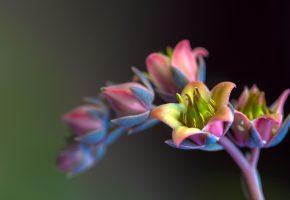 Обои цветок, бутоны, пыльца, лепестки, стебель