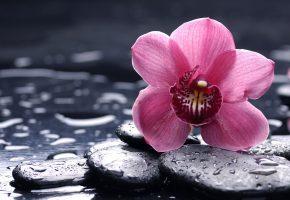 цветок, камни, orchid, орхидея, розовая