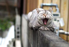 Обои уши, пасть, морда, кошка, усы, язык, лапы, хвост