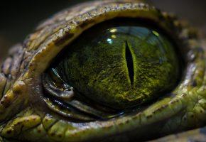 Рептилия, глаз, зрачок, макро