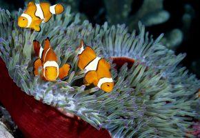 Обои рыбка, кораллы, море, губка, вода, океан, глубина