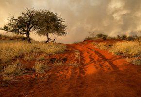 Обои Африка, холмы, трава, дерево, песок, дорога