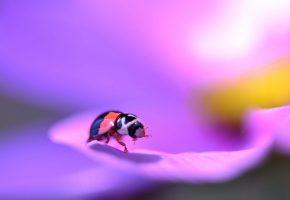 лепестки, цветок, насекомое, жук, лапки, усики