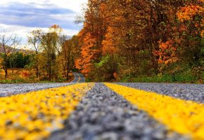 road, forest, trees, дорога, осень, листья, деревья