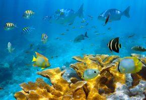 море, морское дно, рыбы, кораллы