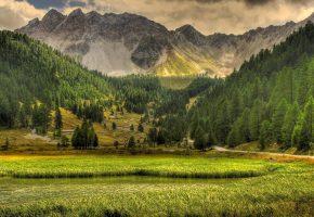 Обои горы, трава, поле, лес, дорога, деревья