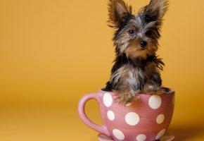 Обои собака, шерсть, чашка, уши, морда