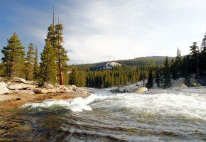 Обои Калифорния, лес, деревья, река, течение, бурный поток, берег, камни