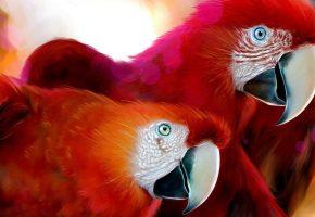ара, красный, рисунок, попугай, клюв, перья