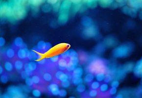 аквариум, рыбка, желтая, красиво, хвост