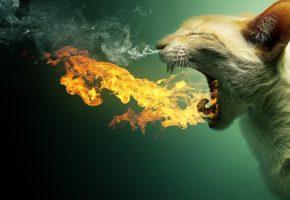 кошка, пылает, дым, огонь, пасть, зубы