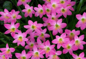 Обои лепестки, цветы, клумба, сад, природа