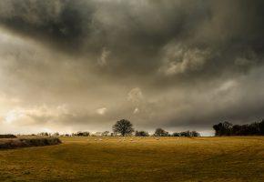Обои овцы, поле, ферма, деревья, горизонт, серые облака, буря