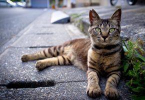 Асфальт, трава, кот, лежит, морда