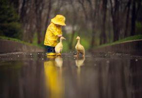 Обои ребёнок, жёлтый плащ, птицы, гусята, отражение