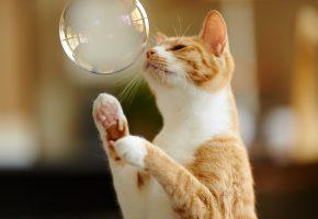 Обои кот, рыжий, пузырь, лапы, игра