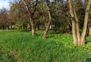 Обои весна, зелень, трава, oboitut.com, деревья, кора, ветки, листья