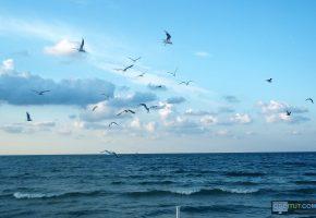 Обои волны, вода, море, чайки, облака