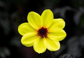 Обои цветок, лепестки, желтые, природа, фон
