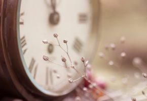 цветы, мелкие, ветка, фокус, часы
