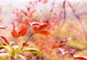 ветка, листья, осень, макро