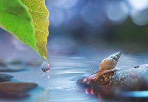 Обои лист, камень, улитка, капля, блики, вода