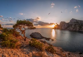 Обои закат, море, берег, дерево, небо, чайки