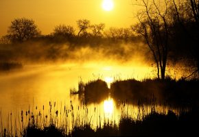восход, солнце, болото, утро, туман