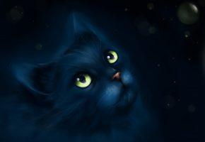 Обои арт, чёрный, кот, рисовка, взгляд, усы