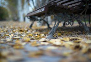 Обои скамья, улица, листья, парк