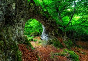 Обои лес, камни, деревья, листья