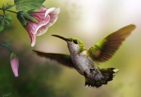 Обои арт, птица, колибри, цветок, розовый