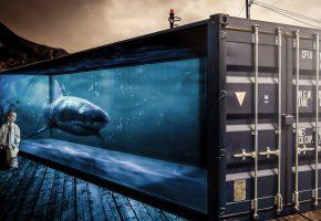 Обои Контейнер, стекло, вода, акула, мальчик